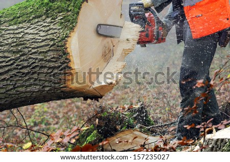 lumberjack at work - stock photo