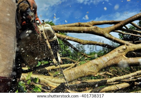 Lumberjack Cutting a big Tree in the Forest - stock photo