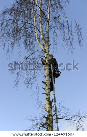 lumberjack cutting branches high up in a birch tree - stock photo