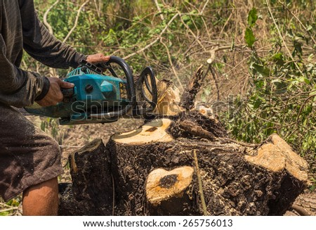 Lumberjack logger worker  cutting firewood timber tree in forest with chainsaw - stock photo
