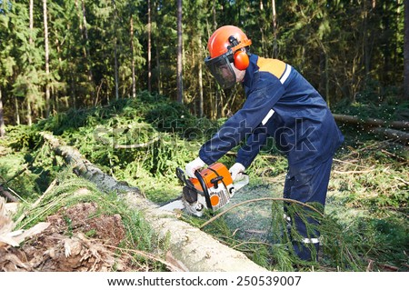 Lumberjack logger worker in protective gear cutting firewood timber tree in forest with chainsaw - stock photo