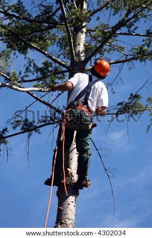 lumberjack with chainsaw on tree - stock photo