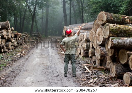 Lumberjack with helmet standing in front of stacked trunks in forest - stock photo