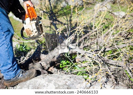 Lumberjack worker cutting holm oak firewood with a chainsaw - stock photo