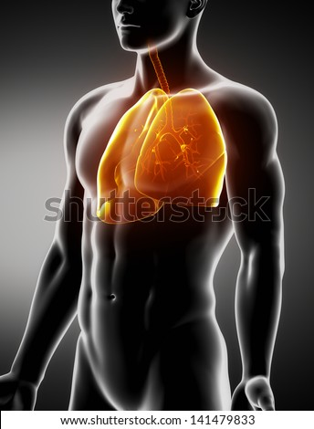 Lungs and trachea male anatomy anterior x-ray view - stock photo