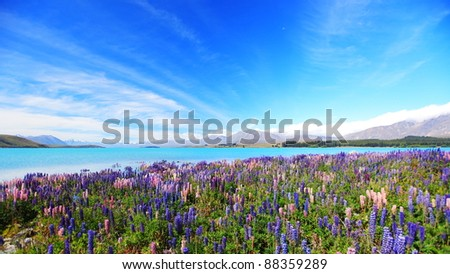 lupines field at lake Tekapo, New Zealand - stock photo