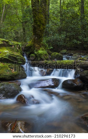 lush cascade in forest of south carolina - stock photo
