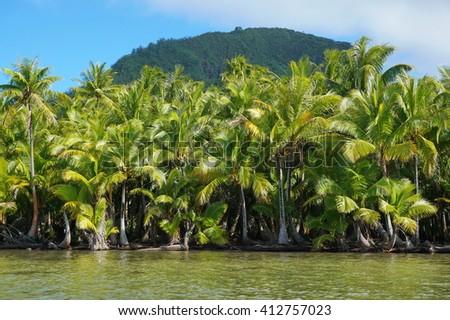 Lush coconut trees on the shore of the lake Fauna Nui, Maeva, Huahine island, French Polynesia - stock photo