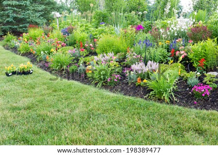 Lush flowerbed with colorful flowering celosia and ornamental plants with new celosia plants standing ready on the lawn for transplanting - stock photo