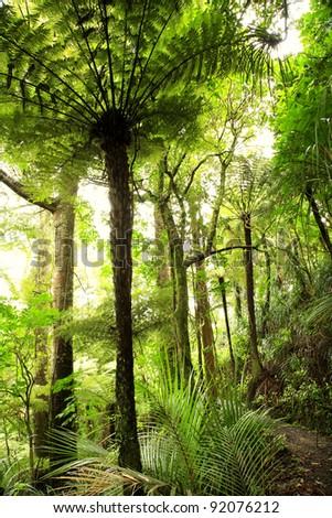 Lush foliage in tropical jungle - stock photo