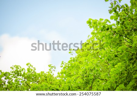 lush foliage of the trees against the sky - stock photo