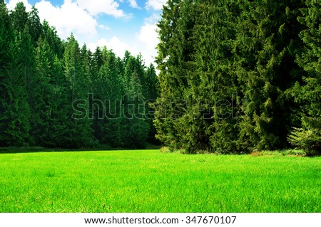 Lush grass on a idyllic forest glade - stock photo