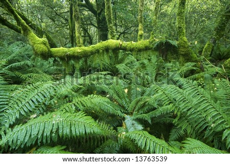 Lush green ferns and mossy tree branches on along the Milford Track, Fiordland, New Zealand - stock photo