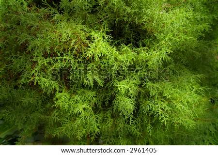 lush green foliage - stock photo