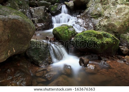 lush green forest with waterfall - stock photo