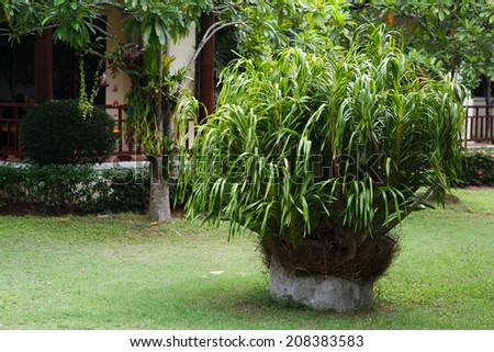 Lush Green, gardening, landscaping, park decoration and design - stock photo