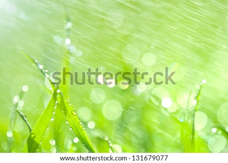 Lush green grass with falling drops - stock photo