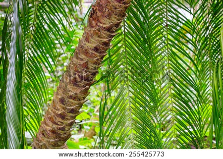 Lush green palm tree trunk and fronds - stock photo