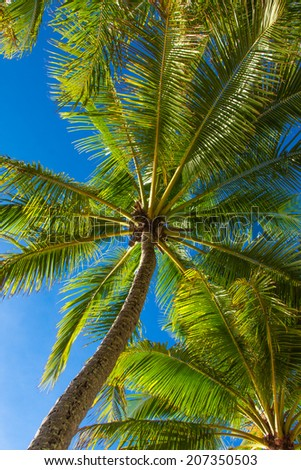 Lush green palm trees against a blue sky - stock photo