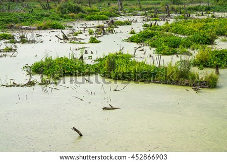Lush green swamp and tropical forest scene. The sun is peaking through the thick foliage to reveal a gorgeous natural landscape - stock photo