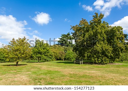 Lush Green Tranquil Woodland Garden in Sunshine - stock photo