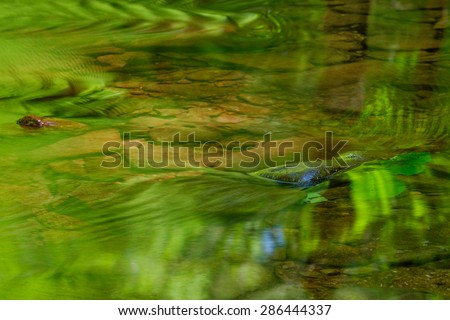 Lush green trees and ferns reflected in a shallow clear brook creating an abstract image - stock photo
