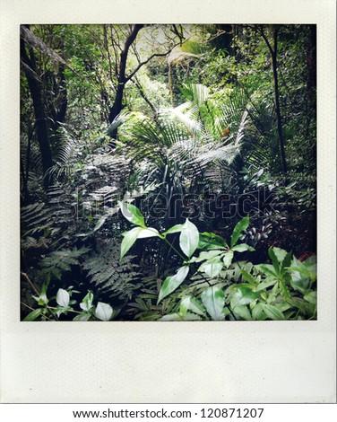 Lush green tropical rain forest foliage - stock photo