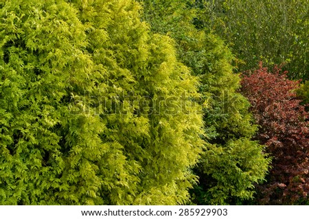 lush greens and reds of garden foliage - stock photo