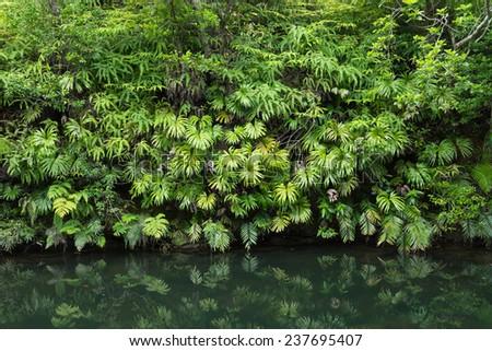 Lush Jungle foliage reflecting in calm forest stream - stock photo
