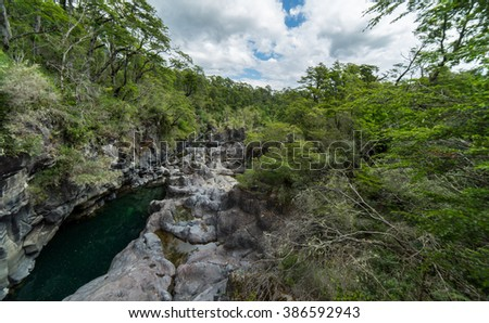 Lush Jungle near Puerto Varas Chili, Patagonia Region - stock photo