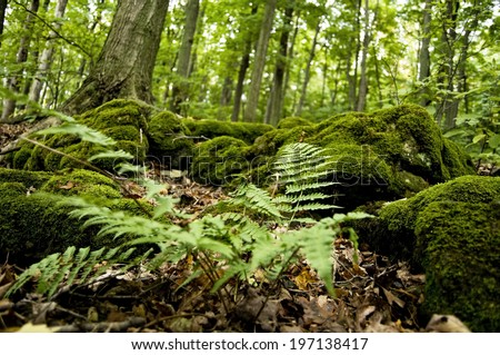 Lush moss and ferns cover the forest floor. - stock photo