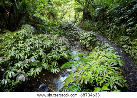 Lush New Zealand tropical forest - stock photo
