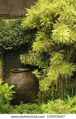 Lush Tropical garden - stock photo