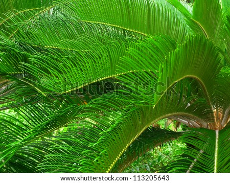Lush Tropical palm fronds in El Yunque Rain Forest of Puerto Rico - stock photo