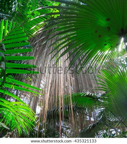 lush tropical plant background with palms and hanging roots - stock photo