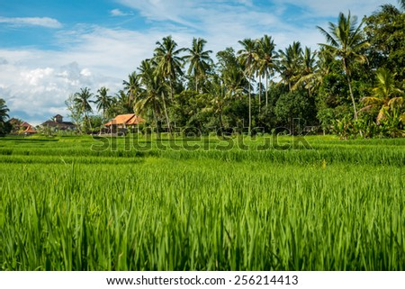 Lush tropical rice fields in Ubud, Indonesia - stock photo
