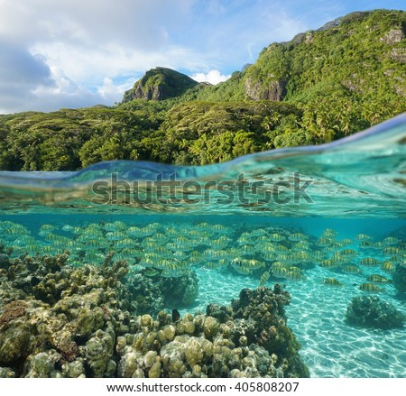 Lush tropical shore with a school of fish and corals underwater, split view above and below water surface, Pacific ocean, Huahine island, French Polynesia - stock photo