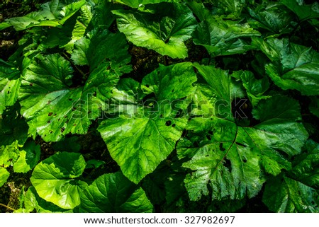 lush vegetation - stock photo
