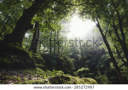 lush vegetation green forest in summer - stock photo