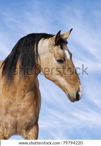 lusitano horse and sky - stock photo