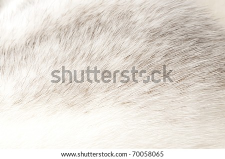 luxurious mink fur texture close-up background - stock photo