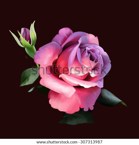 luxury pink rose, Bud, close up, on black background, watercolor illustration - stock photo