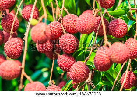 Lychee fruit Asia Thailand - stock photo