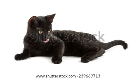 lying black cat licks it's lips - stock photo