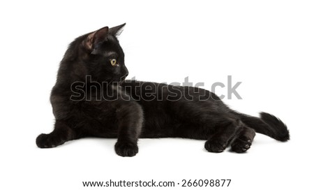 lying black cat looks at it's tail - stock photo