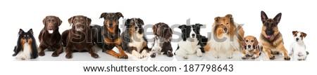 Lying dogs - stock photo