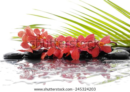 Lying down branch red orchid and wet black stones with palm leaf - stock photo