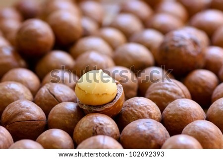 macadamia nuts - stock photo