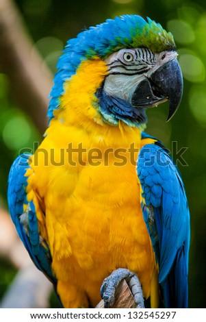 macaw bird head - stock photo