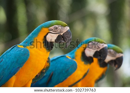 macaw close up - stock photo